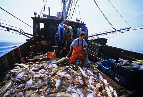 la pesca comercial