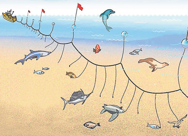 palangre pesca