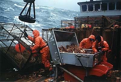 pesca comercial en grandes cantidades