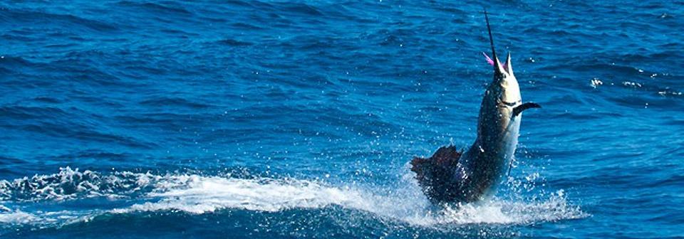 pesca en guatemala de pez vela