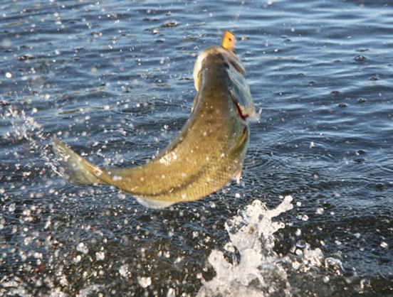 pesca en superficie