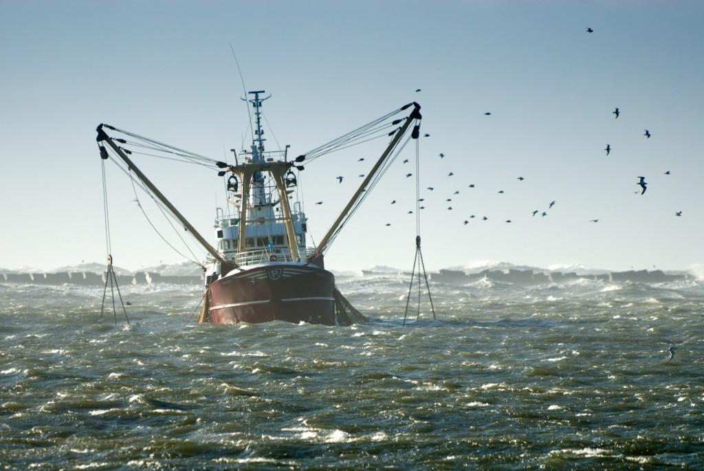 pesca industria