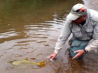 pesca y devolucion pez