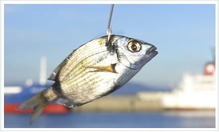 pez cebo encarnar