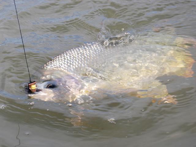 pez momento picada