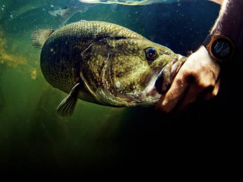 peces y fauna marina